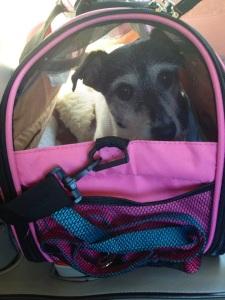 Bailey travel